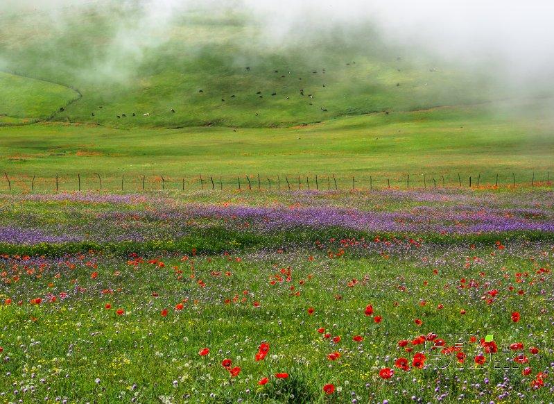 قاب عکس مدرن بهار منظره   طبیعت / روستایی اثر فرید ثانی