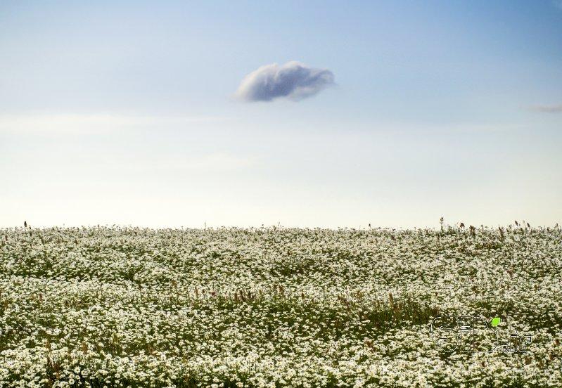 قاب عکس مدرن بدون عنوان منظره   طبیعت / روستایی اثر فرید ثانی