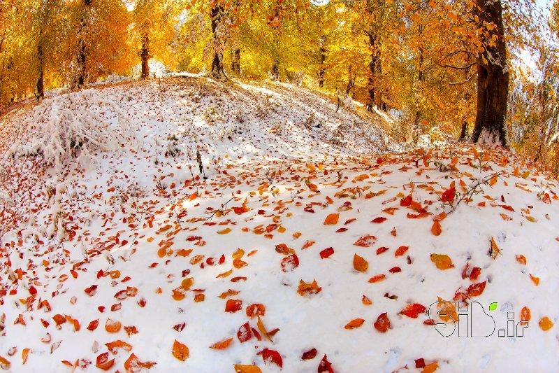 پاییز در زمستان