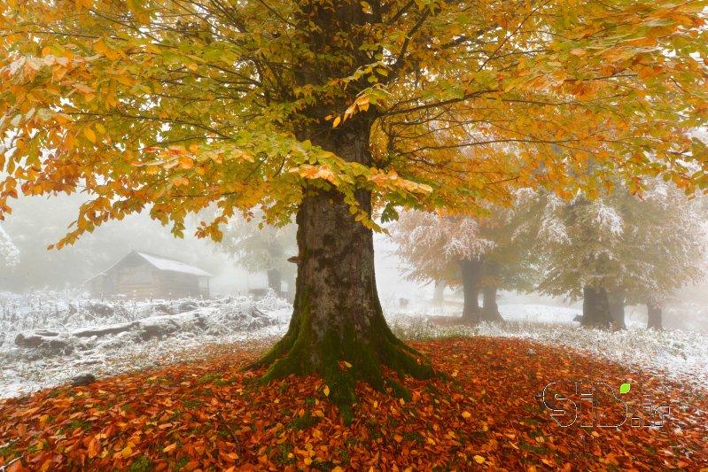 زمستان در پاییز