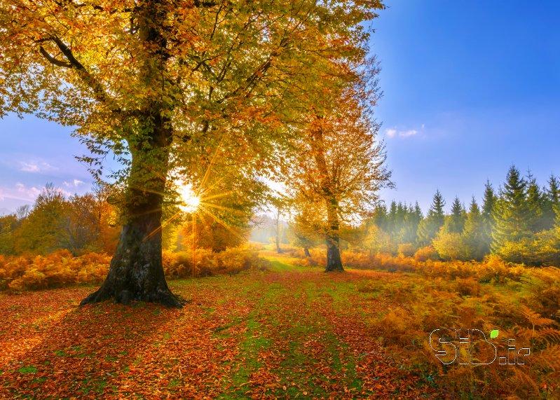 طلوع پاییزی