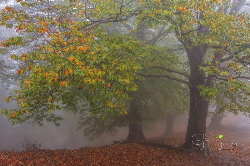 رقص در مه