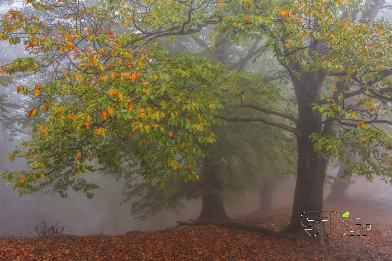 قاب عکس مدرن رقص در مه منظره   طبیعت / روستایی اثر علی  اصغری معلم کلایی