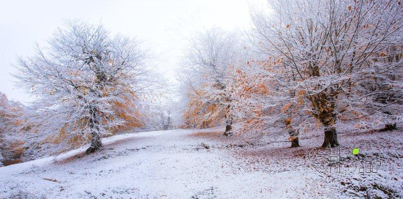 Freezing autumn