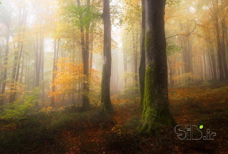 قاب عکس مدرن  منظره   طبیعت / روستایی اثر حامد تیزرویان