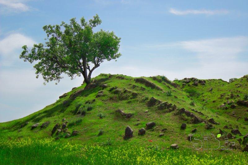 قاب عکس مدرن  منظره   طبیعت / روستایی اثر بهنام ورشوساز