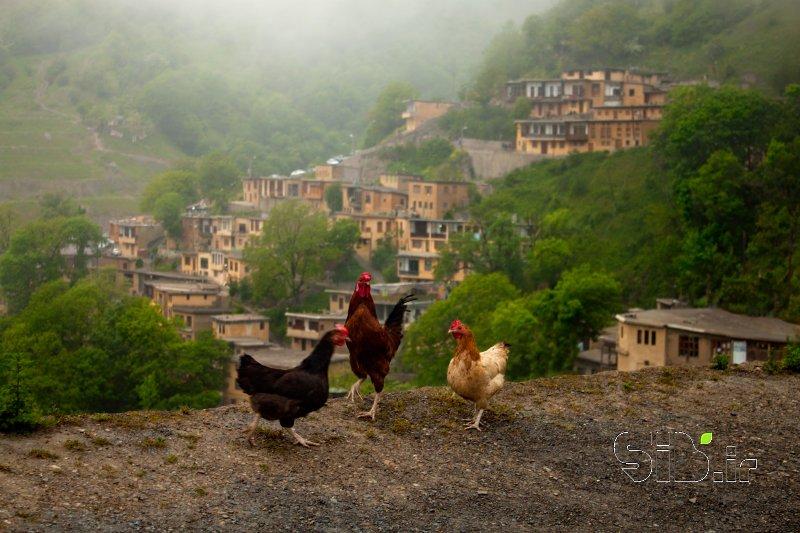 قاب عکس مدرن ماسوله منظره   طبیعت / روستایی اثر حمیدرضا امیدبخش