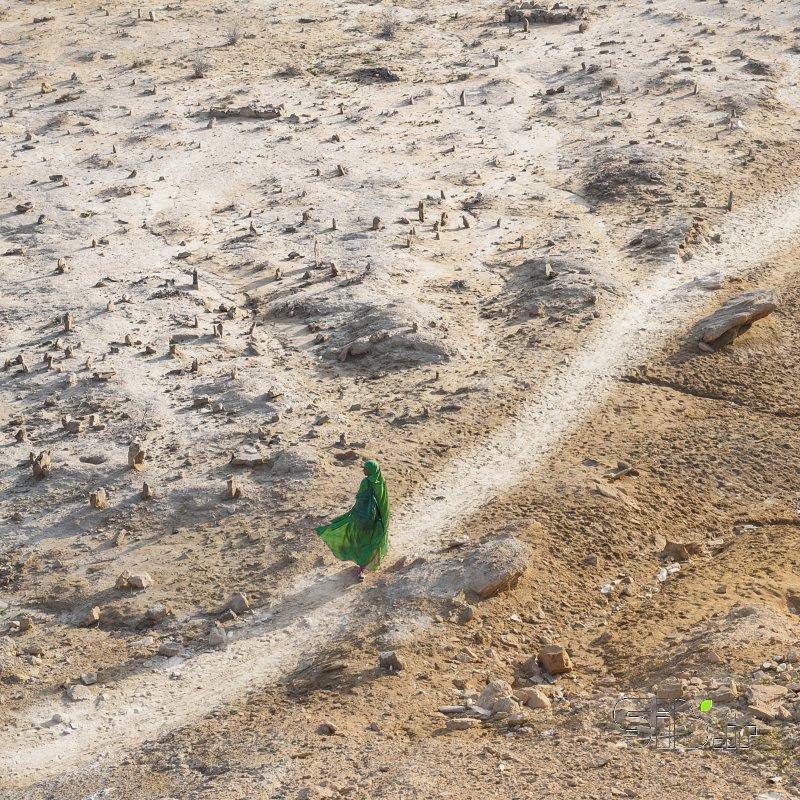 قاب عکس مدرن مرگِ سبز منظره   طبیعت / روستایی اثر محمد رضا معصومی