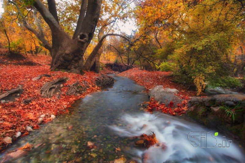 قاب عکس مدرن فصل تولد رنگ  منظره   طبیعت / روستایی اثر سعید  یونسی