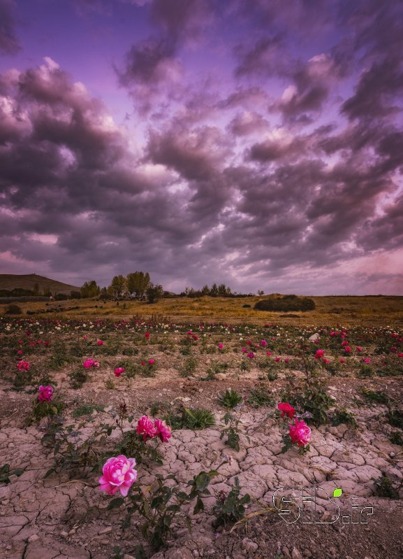 قاب عکس از خاک به گل  منظره   طبیعت / روستایی اثر سعید  یونسی