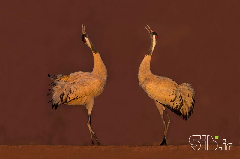 رقص فرشتگان