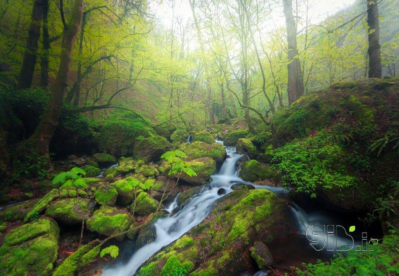 جنگل کاسپین