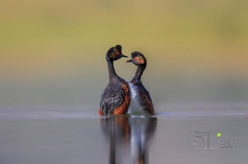 رقص عاشقانه