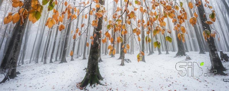 اولین برف