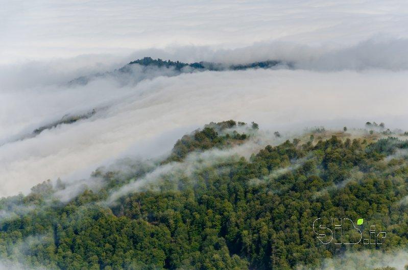 جنگل مه آلود