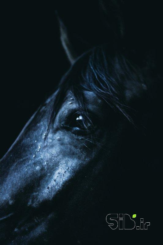 اسب حیوان نجیبی است