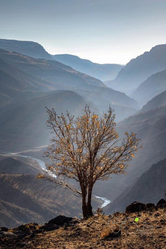 سکوت پاییز