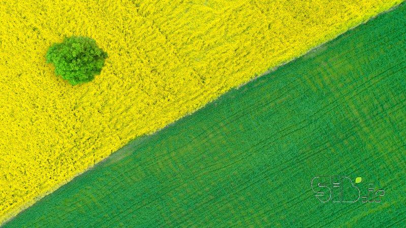 قاب عکس مدرن زرد و سبز آبستره اثر محمد رضا معصومی