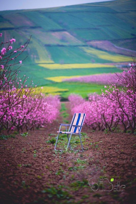 قاب عکس انتظار در بهار منظره   طبیعت / روستایی اثر حمیدرضا محمدزاده
