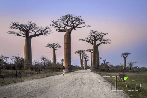 Baobab Street