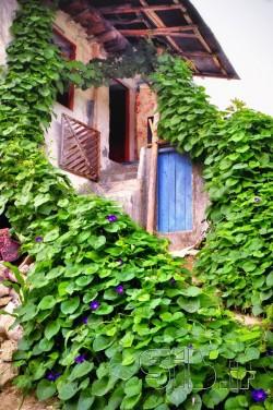 خانه سبز نیلوفری