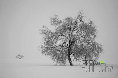 تنها در برف