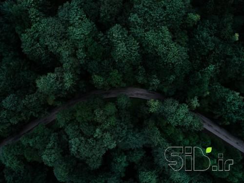 جاده سبز