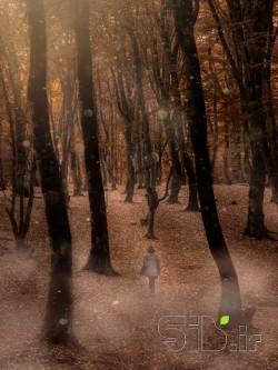 در جنگل رویاها