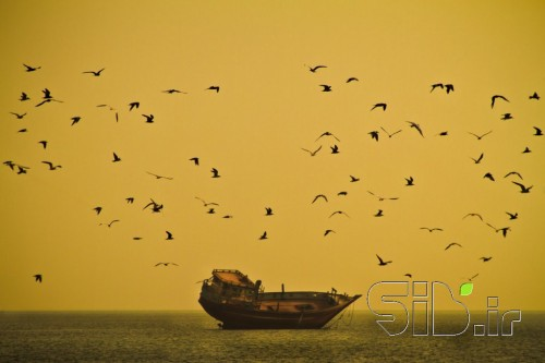 طلوع خلیج