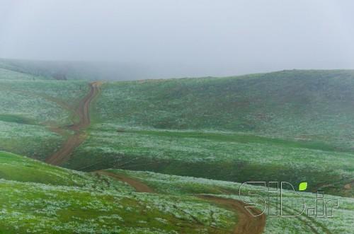 راه مه آلود