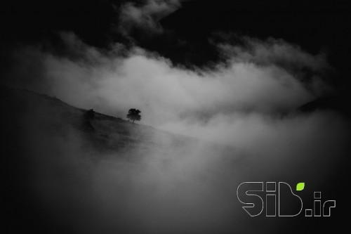 تنهایی و مه