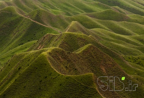 ترکمن صحرا