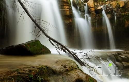 آبشار و درخت