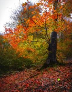 پاییز عاشق .....