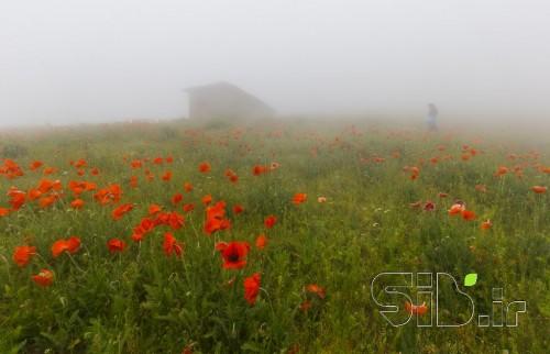 عبور از مه