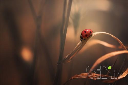 در آغوش طبیعت...