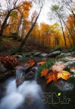 هنگامیکه برگهای پاییزی.....