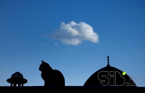 گربه و ابر