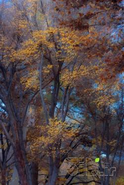 پاییز دل انگیز
