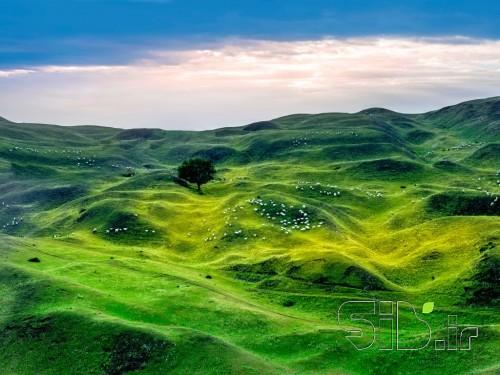 زرد سبز آبی