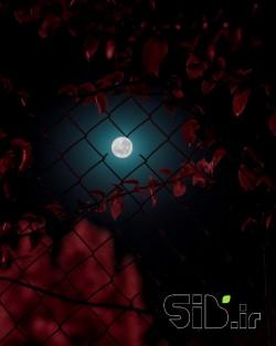 ماه بین ابر تار