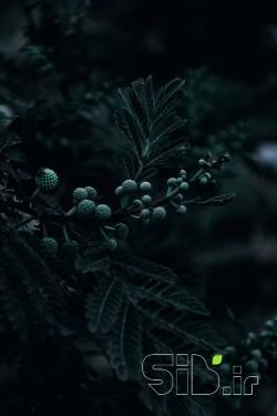 رنگ طبیعت
