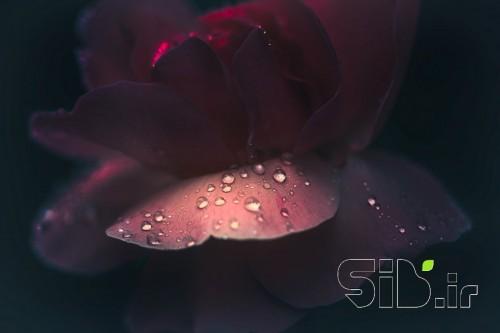 گل و قطره...